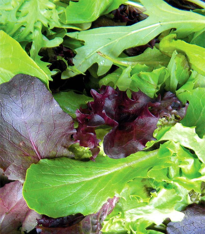 edible gardening: THE LURE OF LETTUCE