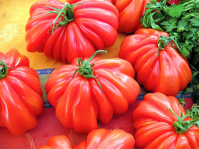 edible gardening: FROM SEED TO SAUCE