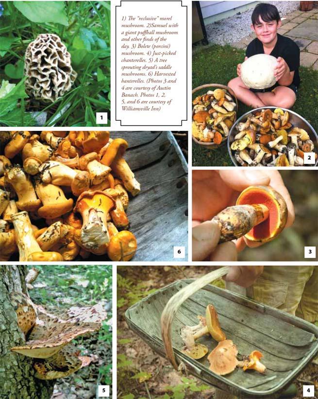 Designer Mushrooms