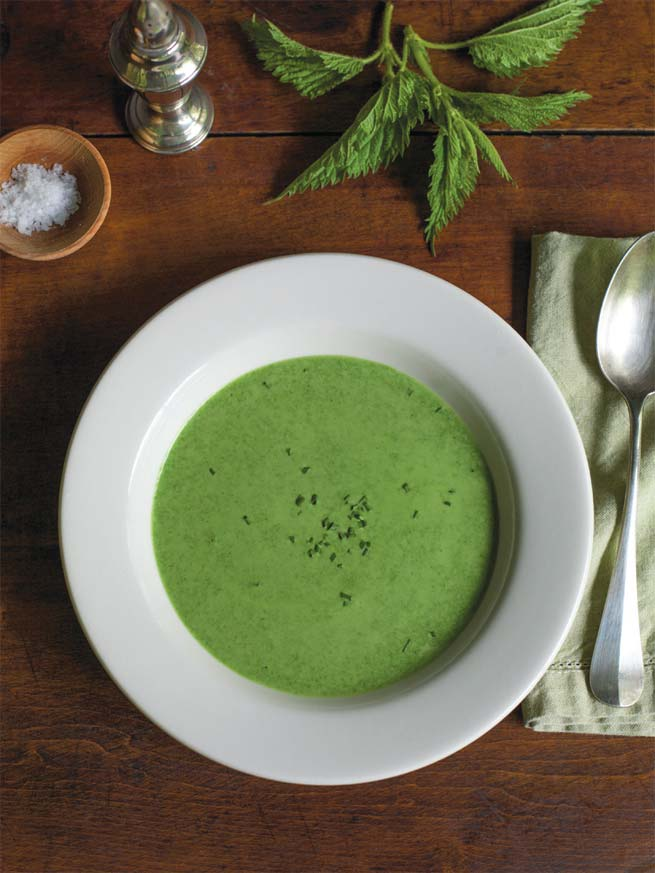 CREAM OF STINGING NETTLE SOUP