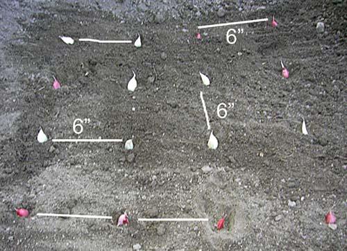 gardeningLabor3